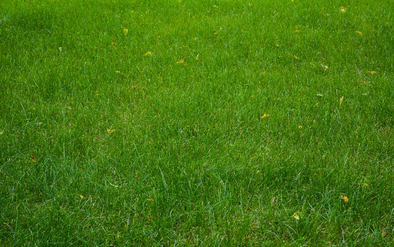 Make sure the fertilizer your lawn care team uses on your grass is safe for your family and pets!